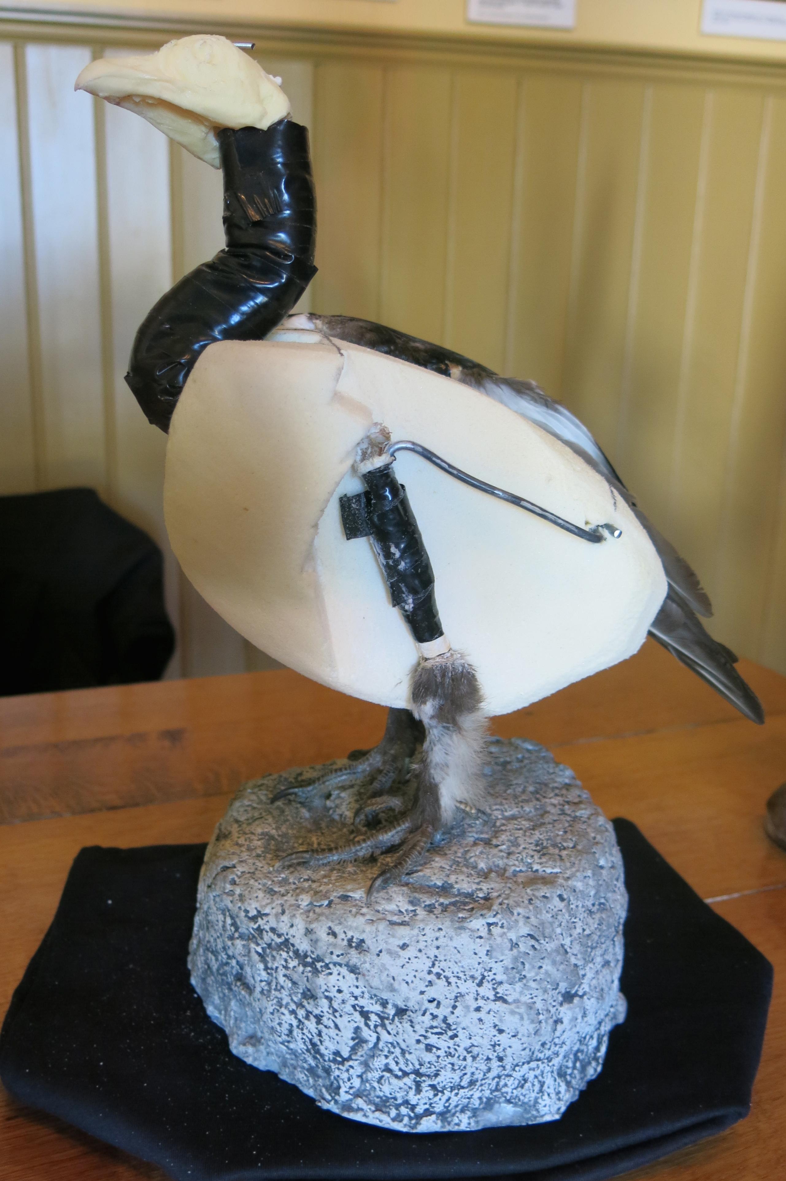 Taksidermist-fugl